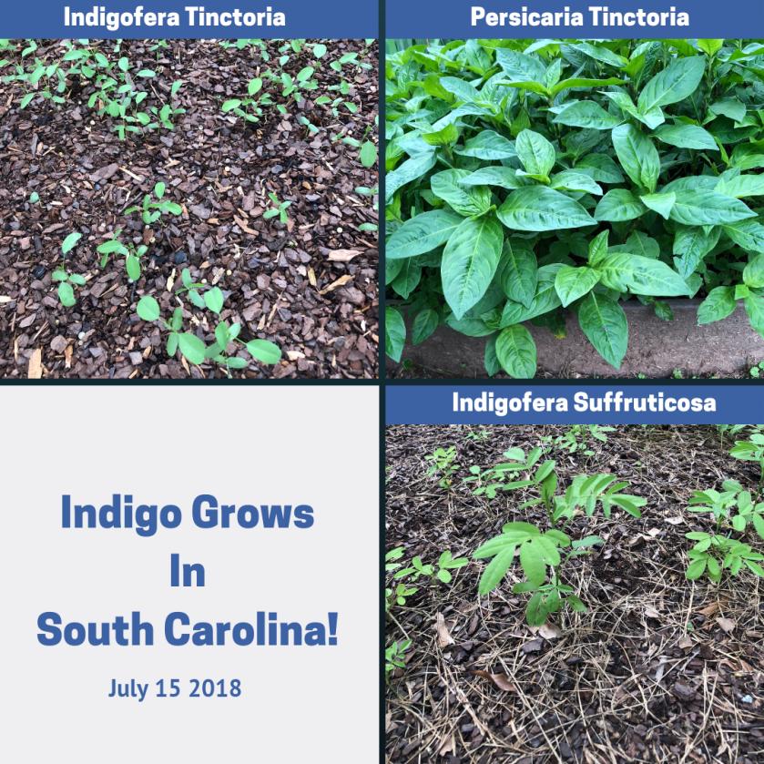 Indigo Garden July 2018