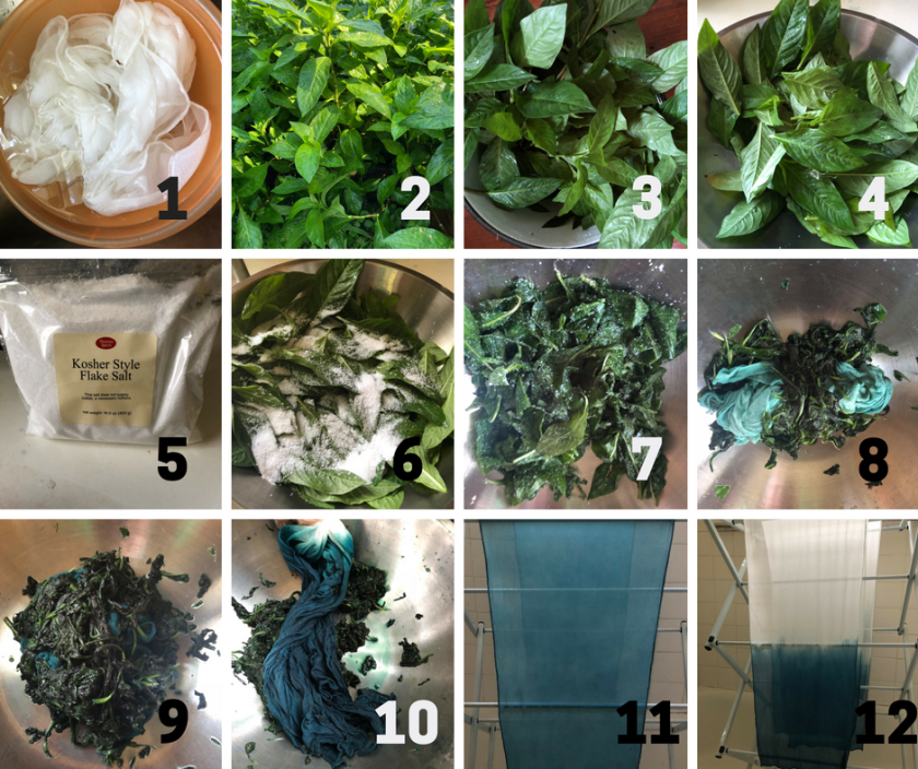 Step by step- Fresh Leaf Indigo The Salt Method