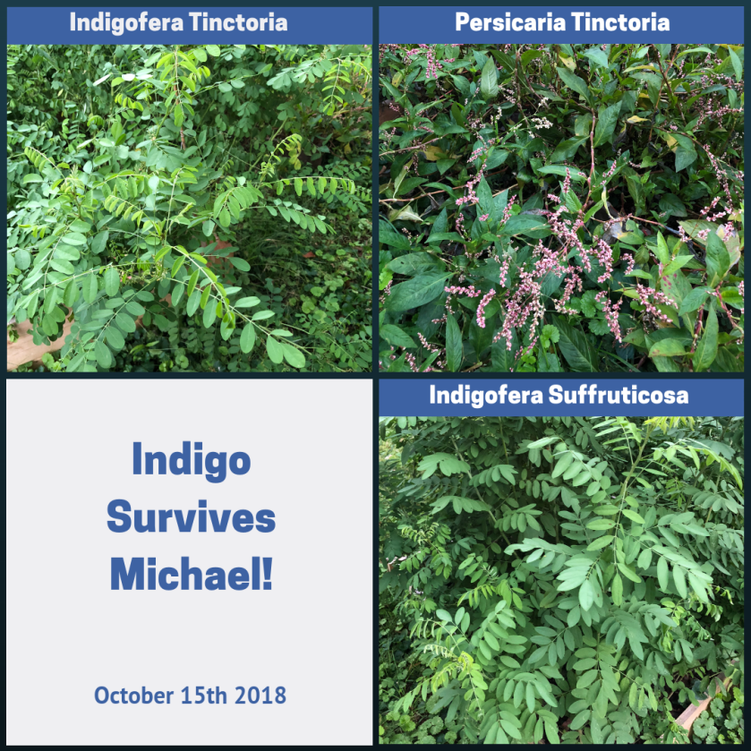Indigo Garden Survives Tropical Storm Michael