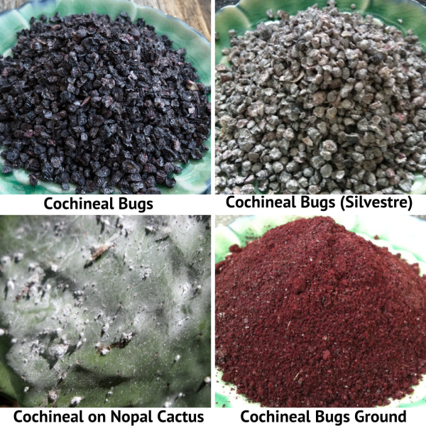 Cochineal Bugs